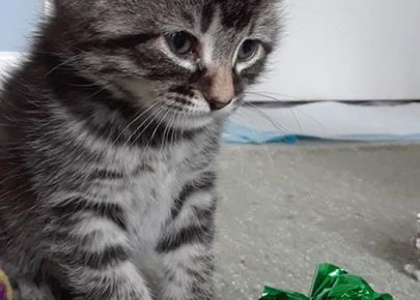 Nemo-Kitten