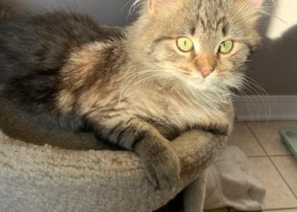 Ragu-Kitten