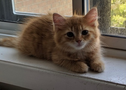 Sabrina-Kitten