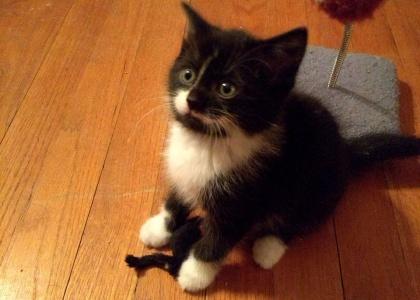 Jojo-Kitten