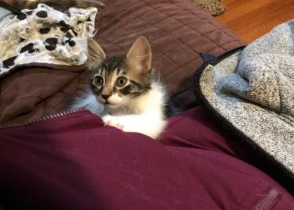Ana-Kitten