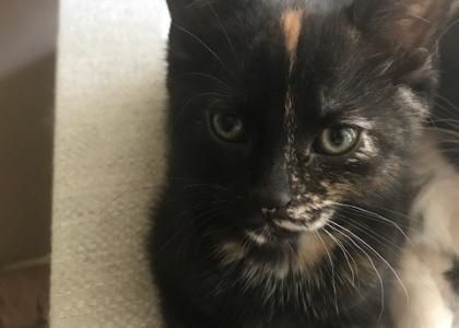Tigger-Kitten