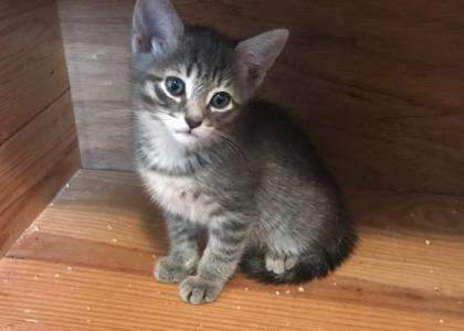 Flynn- Kitten