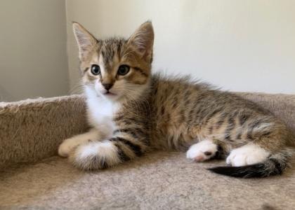 Pickles-Kitten