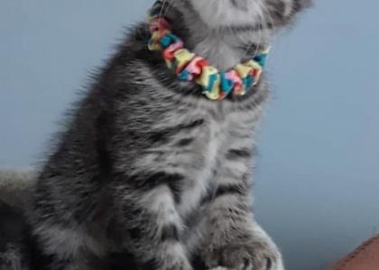 Nyla-Kitten