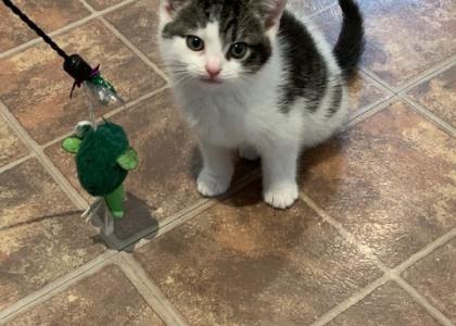 Charli- Kitten