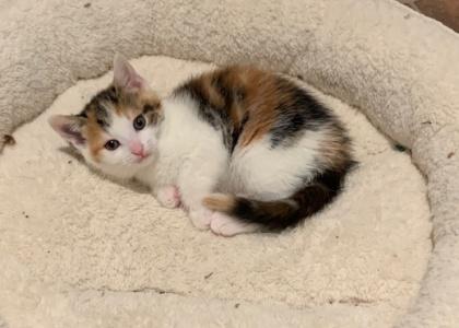 Fern- Kitten