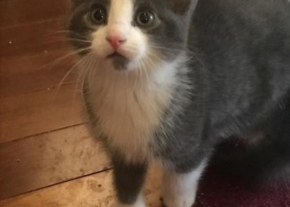Harlow-Kitten
