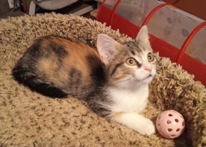 Sushi-Kitten