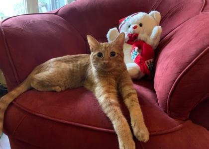 Cheetos-Kitten