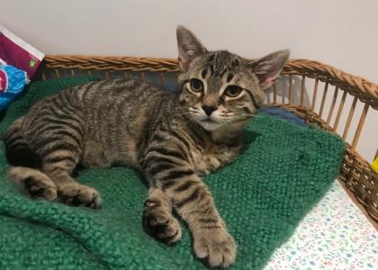 Nikki-Kitten