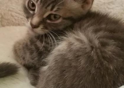 Rickon-Kitten