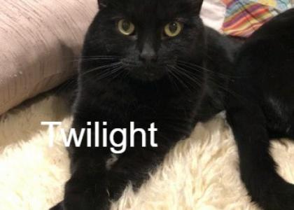 Twilight-Adult
