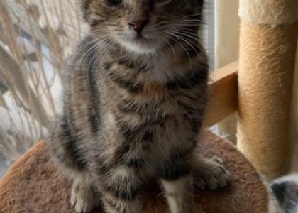 Freya-Kitten