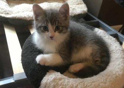 Hades-Kitten