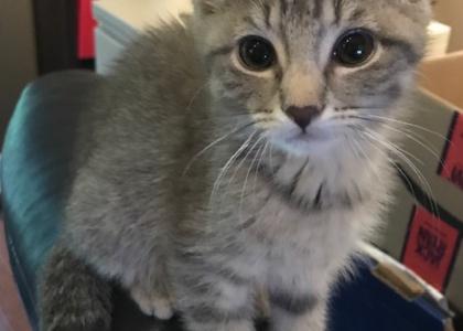Lollipop-Kitten