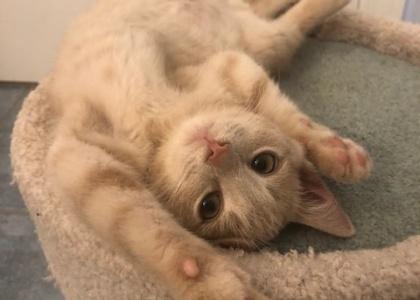 Storm-Kitten