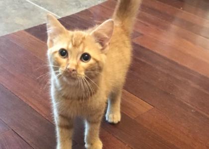 Colby-Kitten