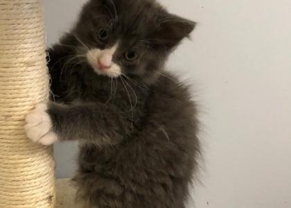 Michael-Kitten