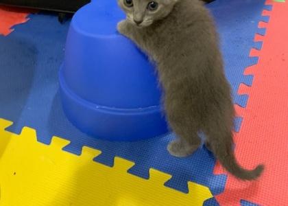 Magnolia- Kitten