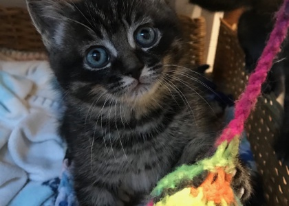 Sherry-Kitten