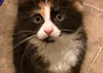 Boo Boo-Kitten