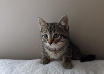Kelly-Kitten