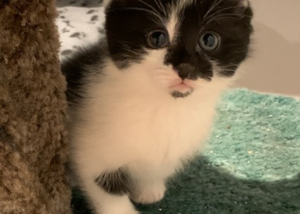 Opa- Kitten