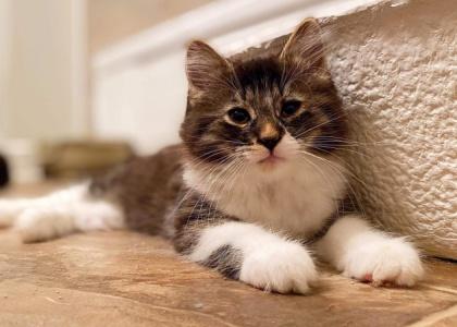 Maddox-Kitten