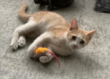 Colt-Kitten