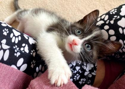 Scooter-Kitten