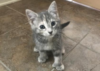 Holly-Kitten