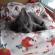 Finn-Kitten