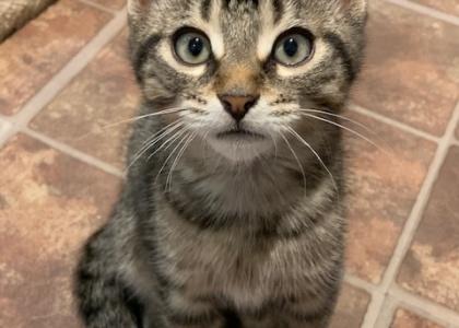 Will- Kitten