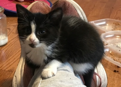 Astaire-Kitten