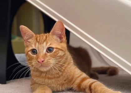 Doritos-Kitten