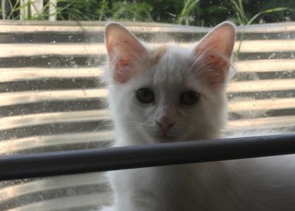 Dove-Kitten