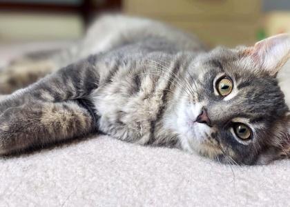 Colton-Kitten
