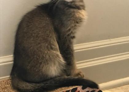 Robb-Kitten