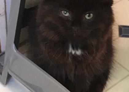 Josephine-Kitten