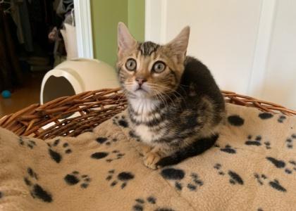 Naomi- Kitten