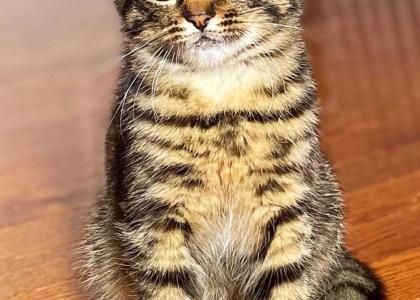 Monkey-Kitten