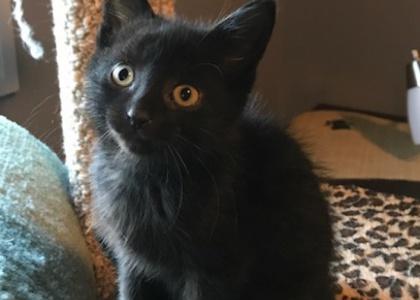 Demetri-Kitten