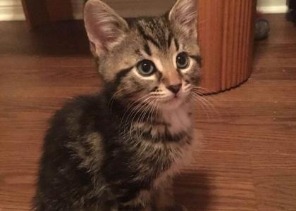 Chewy-Kitten