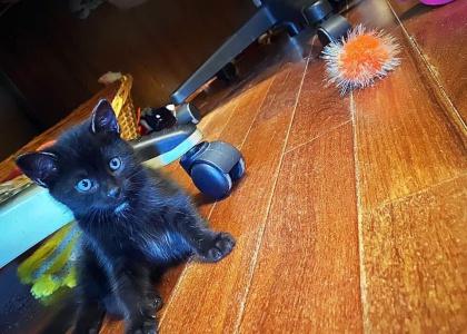 Lili-Kitten