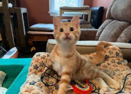 Charlie-Kitten