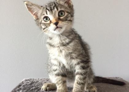 Nala-Kitten