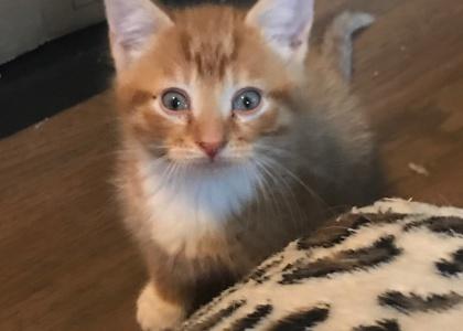 Rufus-Kitten