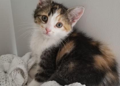 Piglet-Kitten