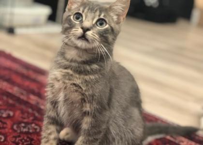Perry-Kitten